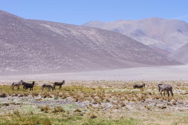 Chile-528